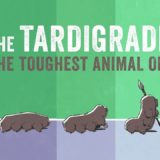 Meet the tardigrade, the toughest animal on Earth – Thomas Boothby